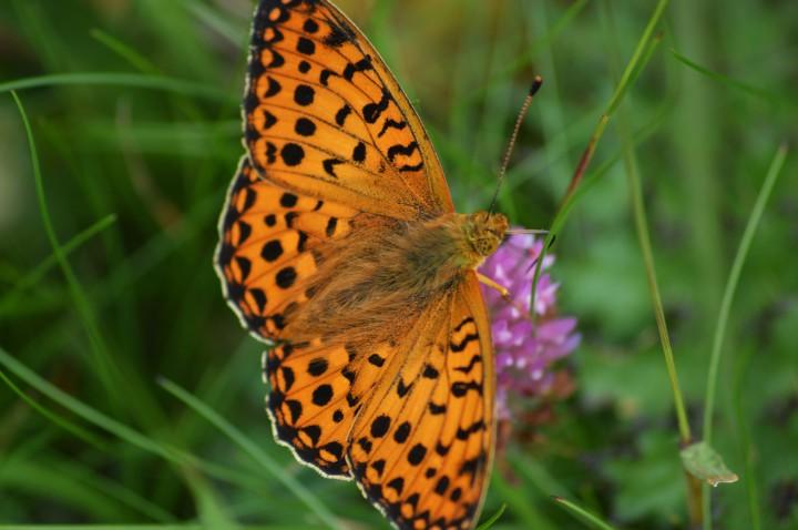 West Coast ButterflyBonanza