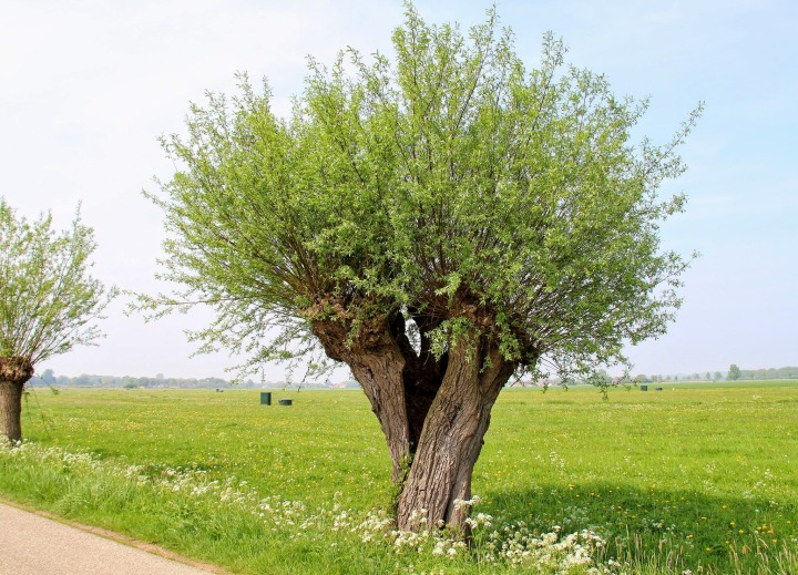 TREEPTYCH: a Guide to Truly Perceive Trees – WillemijnHeideman