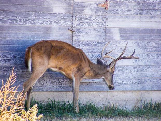 17-cwd-mike-hopper-kansas-dept-of-wildlife-parks-and-tourismcmyk_0