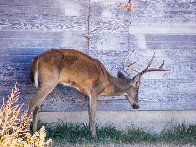 17-cwd-mike-hopper-kansas-dept-of-wildlife-parks-and-tourismcmyk_0