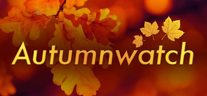 Autumnwatch: why I never miss abeat