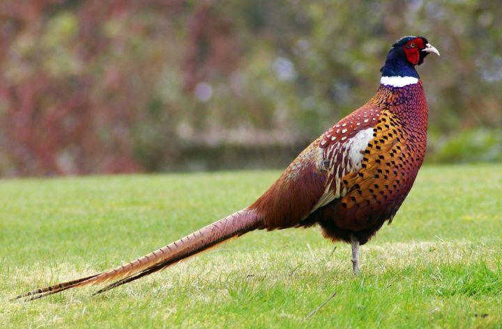 Perceptions of Wildlife: the UrbanHumanist