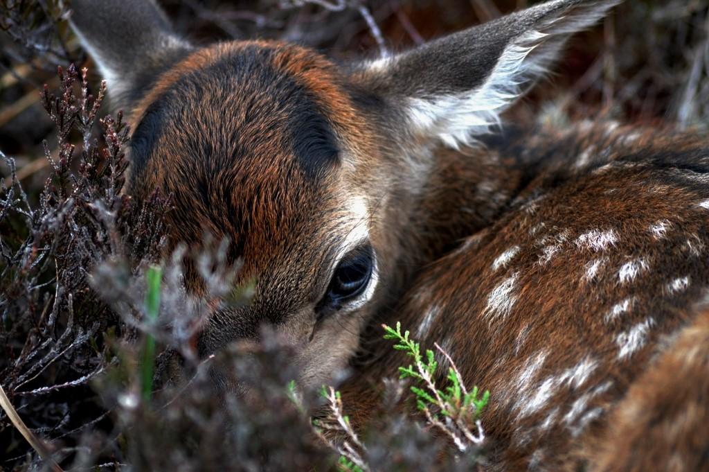 red-deer-invermark