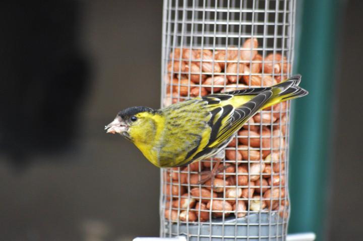 Avian Indicators Of The ShiftingSeason