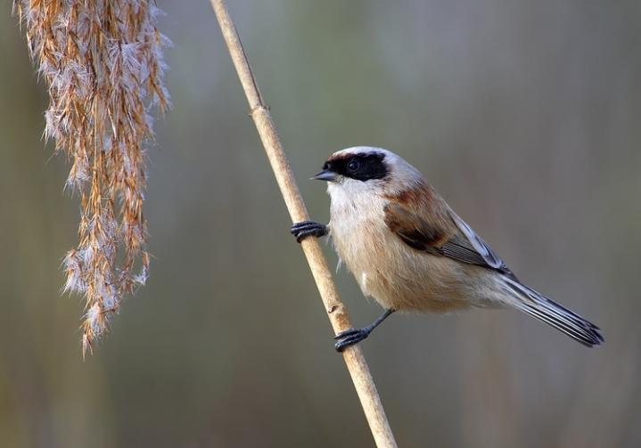 2016: Birding inReview