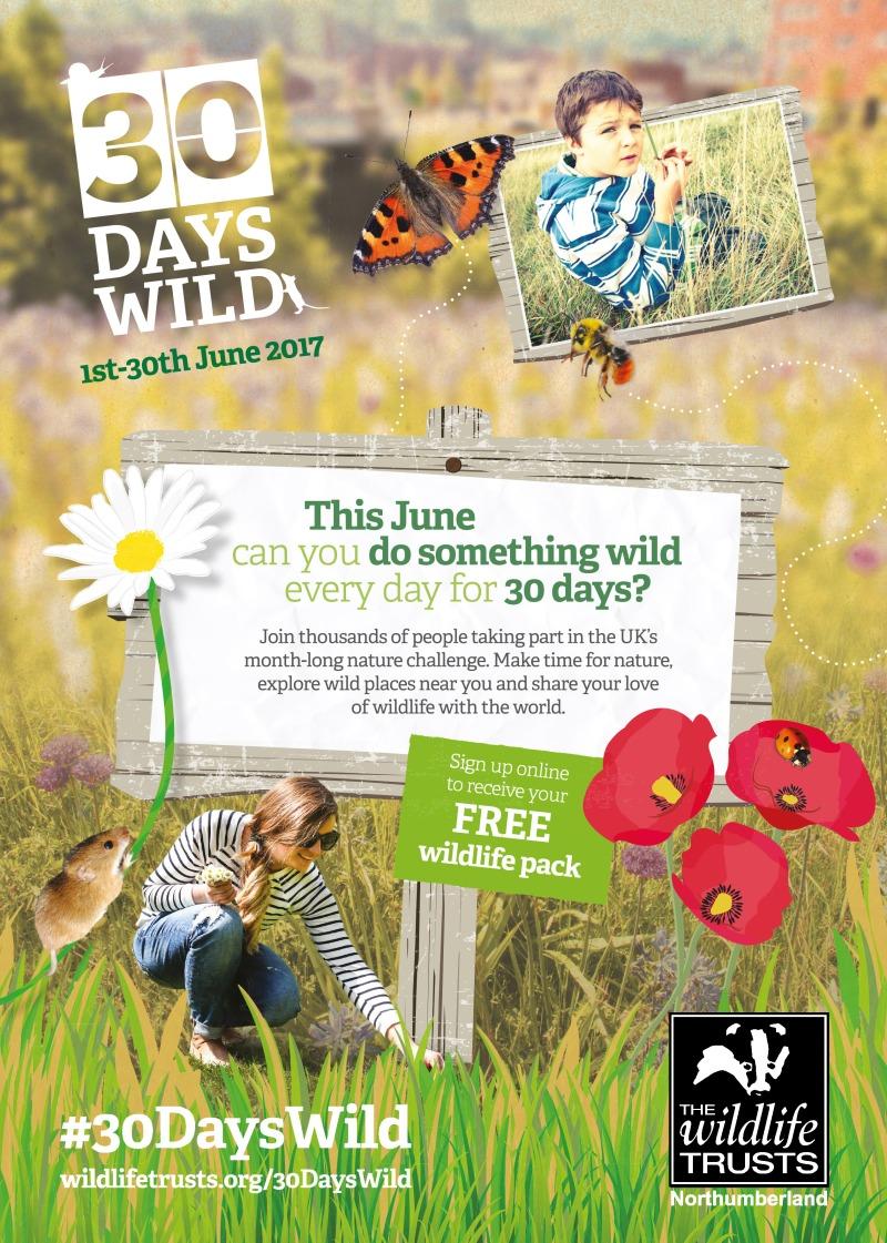 30dayswild poster