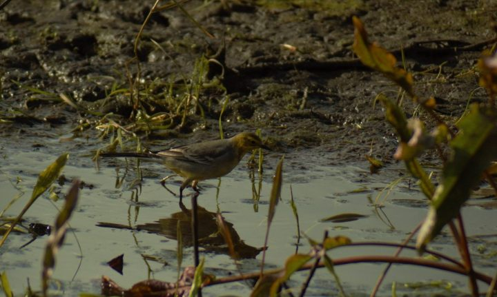 Birding in Northumberland 2017: thehighlights