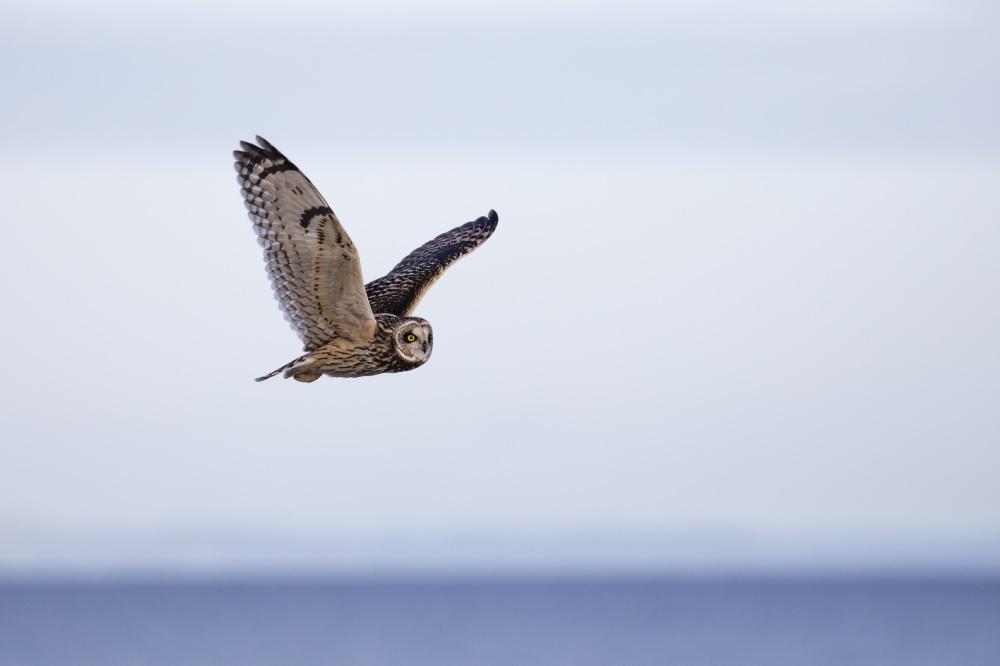 owl-1218685