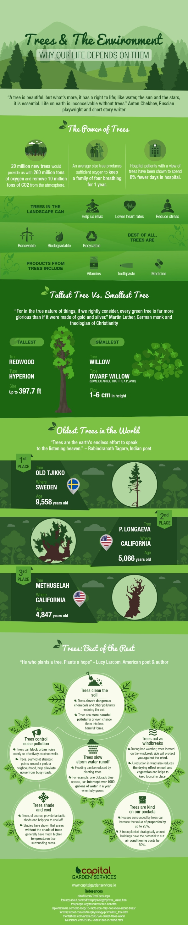 Trees-And-The-Environment-Why-Life-Depends-On-Them