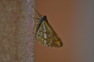 Bordered White