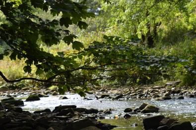 River Wansbeck