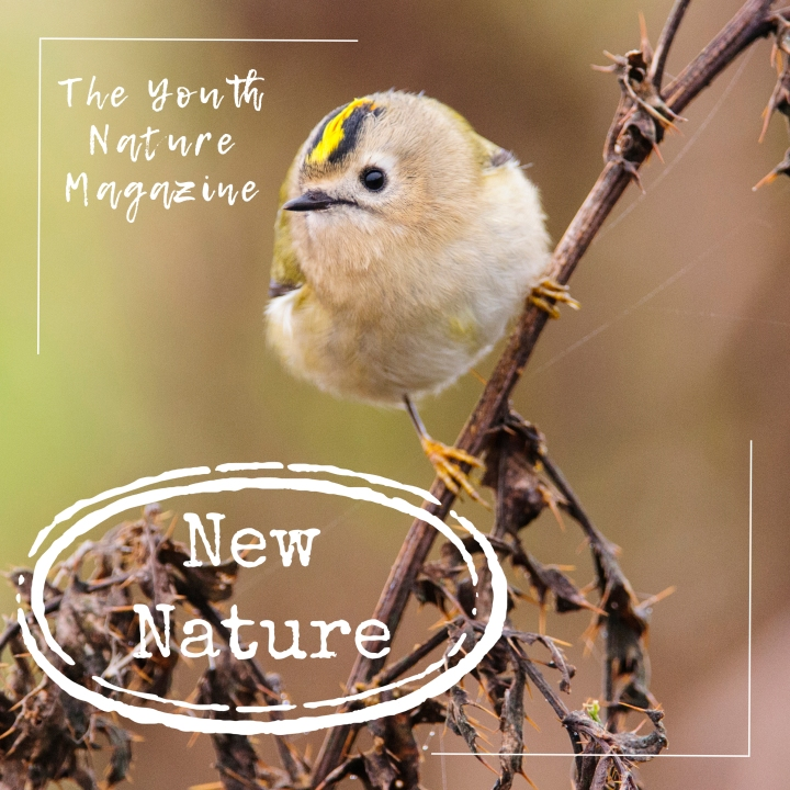 New Nature issue9!