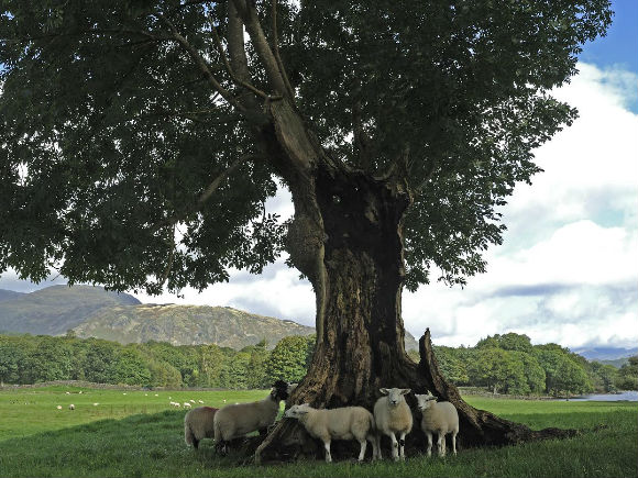 the-courageous-tree-credit-cumbrias-top-50-trees