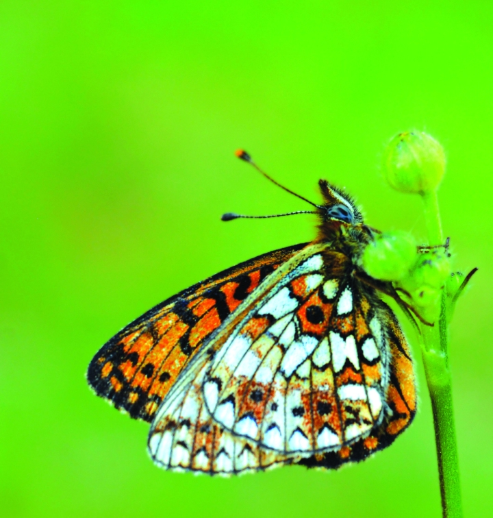 Butterflies: Poetry in Nature – Guest post by Jonathan Bradley