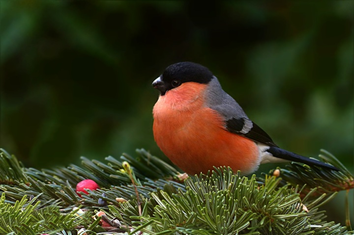 Researchers warn that bird feeders could aid the spread ofdisease