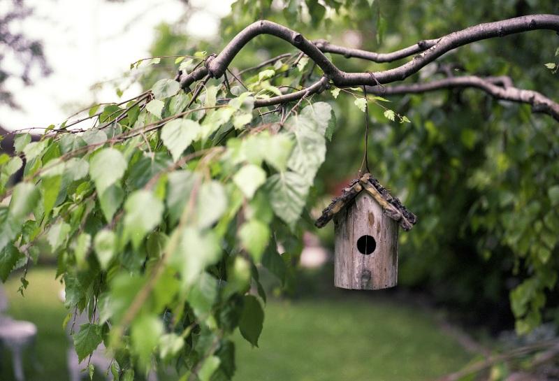 bird-feeder-2344414