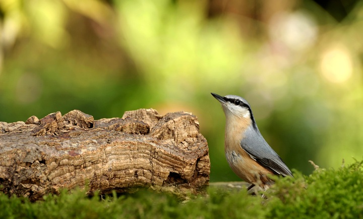 Catering for Garden Birds: A how-toguide