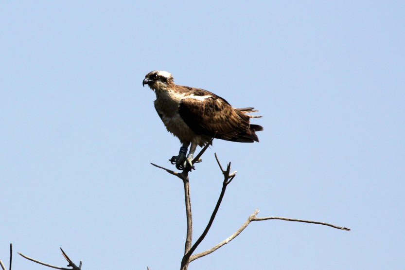 6L (Acomb) photographed by Steven Houston in Southern Senegal