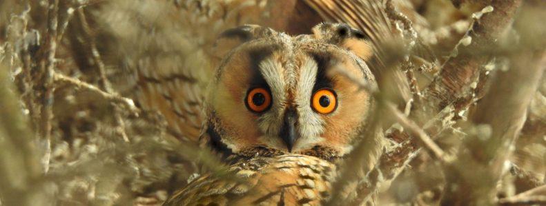 cropped-owls-2756886.jpg