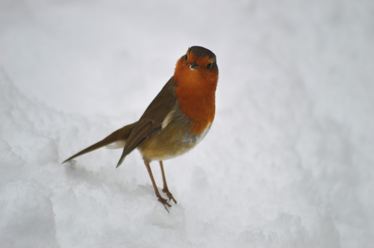 Winter, Wildlife and Animals: The Impact of Cold Weather, and What We Can Do About It