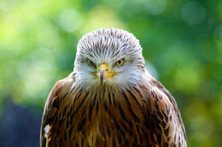 Shooting Times speaks out over raptorpersecution
