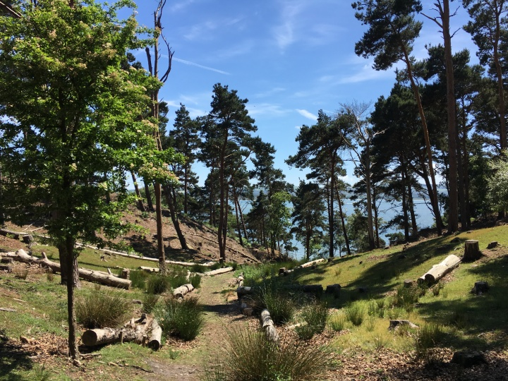 Brownsea Island, a guest post by Frances Jones