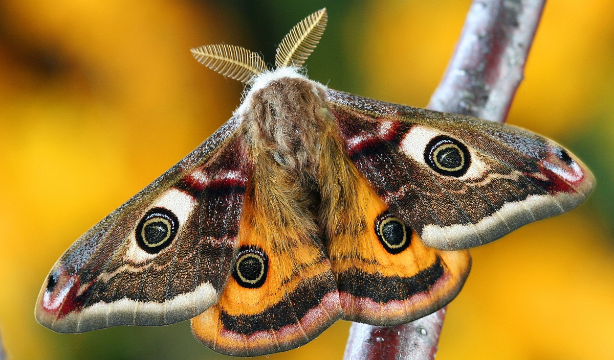 Top blogs on nature, wildlife and the environment