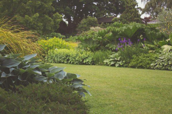 garden-grass-green-7283